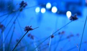 flower-blossom